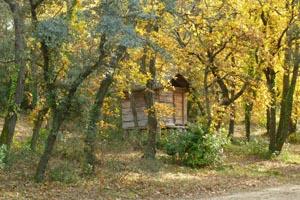 La forêt et sa cabane